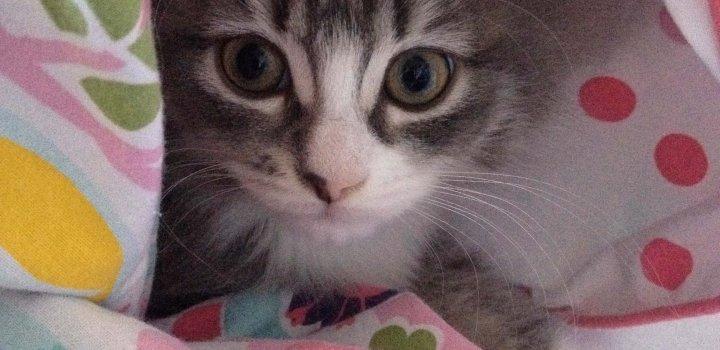 My Cat Minnow